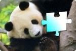 Puzzle de panda